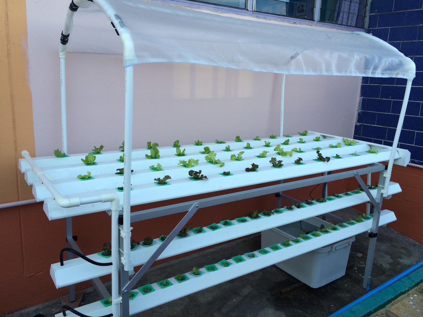 ชุดปลูกผักไฮโดรโปนิกส์ แบบตั้งโต๊ะ ขนาด 2 m. 4 รางปลูก+2รางอนุบาล