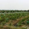 ขายที่ดิน 5 ไร่ ไร่นาสวนผสม ผลไม้ ระบบน้ำสปริงเกอร์ พร้อมสิ่งปลูกสร้าง มีรั่วล้อมรอบ ใกล้อนามัย ยอดพระพิมล