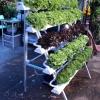 ปลูกผักไฮโดรโปนิกส์ แบบขั้นบันได ขนาด 1.5 m. 5 รางปลูก