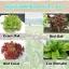 ชุดปลูกผัก Hydro Box thumbnail 4