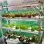 ชุดปลูกผักไฮโดรโปนิกส์ ขนาด 1.5 เมตร 6 รางปลูก พร้อมไฟ LED ปลูกได้ 54 ต้น thumbnail 3