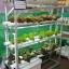 ชุดปลูกผักไฮโดรโปนิกส์ ขนาด 1.5 เมตร 6 รางปลูก พร้อมไฟ LED ปลูกได้ 54 ต้น thumbnail 1