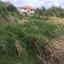 ขายที่ดิน ที่ดินถูก ย่านบางกระดี่ พระราม 2 thumbnail 1