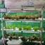 ชุดปลูกผักไฮโดรโปนิกส์ ขนาด 1.5 เมตร 6 รางปลูก พร้อมไฟ LED ปลูกได้ 54 ต้น thumbnail 2