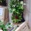 Flora Bag™ (สวนแนวตั้งแบบกระเป๋า-Green wall bag) thumbnail 6