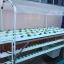 ชุดปลูกผักไฮโดรโปนิกส์ แบบตั้งโต๊ะ ขนาด 2 m. 4 รางปลูก+2รางอนุบาล thumbnail 1