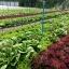 ฟาร์มพระราม2 thumbnail 2