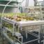 ชุดปลูกผักไฮโดรโปนิกส์ แบบตั้งโต๊ะ ขนาด 1 m 4 รางปลูก+2 รางอนุบาล thumbnail 2