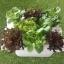 ชุดปลูกผักไฮโดรโปนิกส์ 45 cm. set thumbnail 1