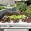ชุดปลูกผักไฮโดรโปนิกส์ 45 cm. set thumbnail 3