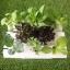 ชุดปลูกผักไฮโดรโปนิกส์ 45 cm. set thumbnail 2