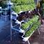 ปลูกผักไฮโดรโปนิกส์ แบบขั้นบันได ขนาด 1.5 m. 5 รางปลูก thumbnail 1