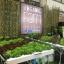 ชุดปลูกผักไฮโดรโปรนิกส์ แบบ ตั้งโต๊ะ ขนาด 3 เมตร จำนวน 8 รางปลูก thumbnail 5