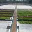 ฟาร์มพระราม2 thumbnail 1