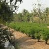 ขายที่สวนจังหวัดนนทบุรี