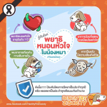 โรคพยาธิหนอนหัวใจในสุนัข ภัยร้ายที่ไม่ควรมองข้าม